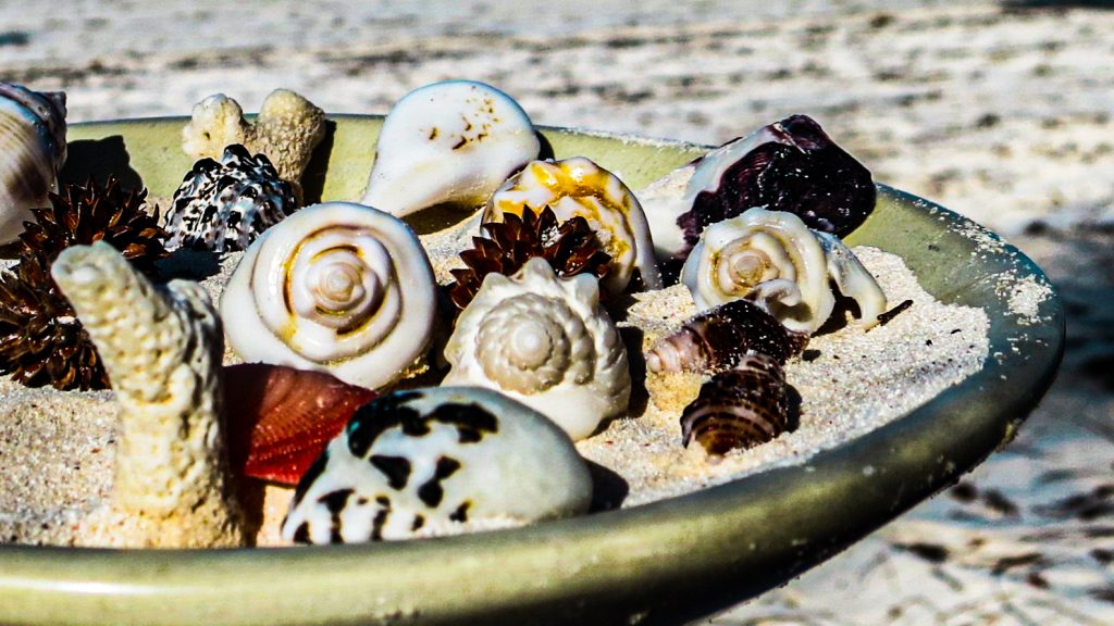 Muscheln Sansibar